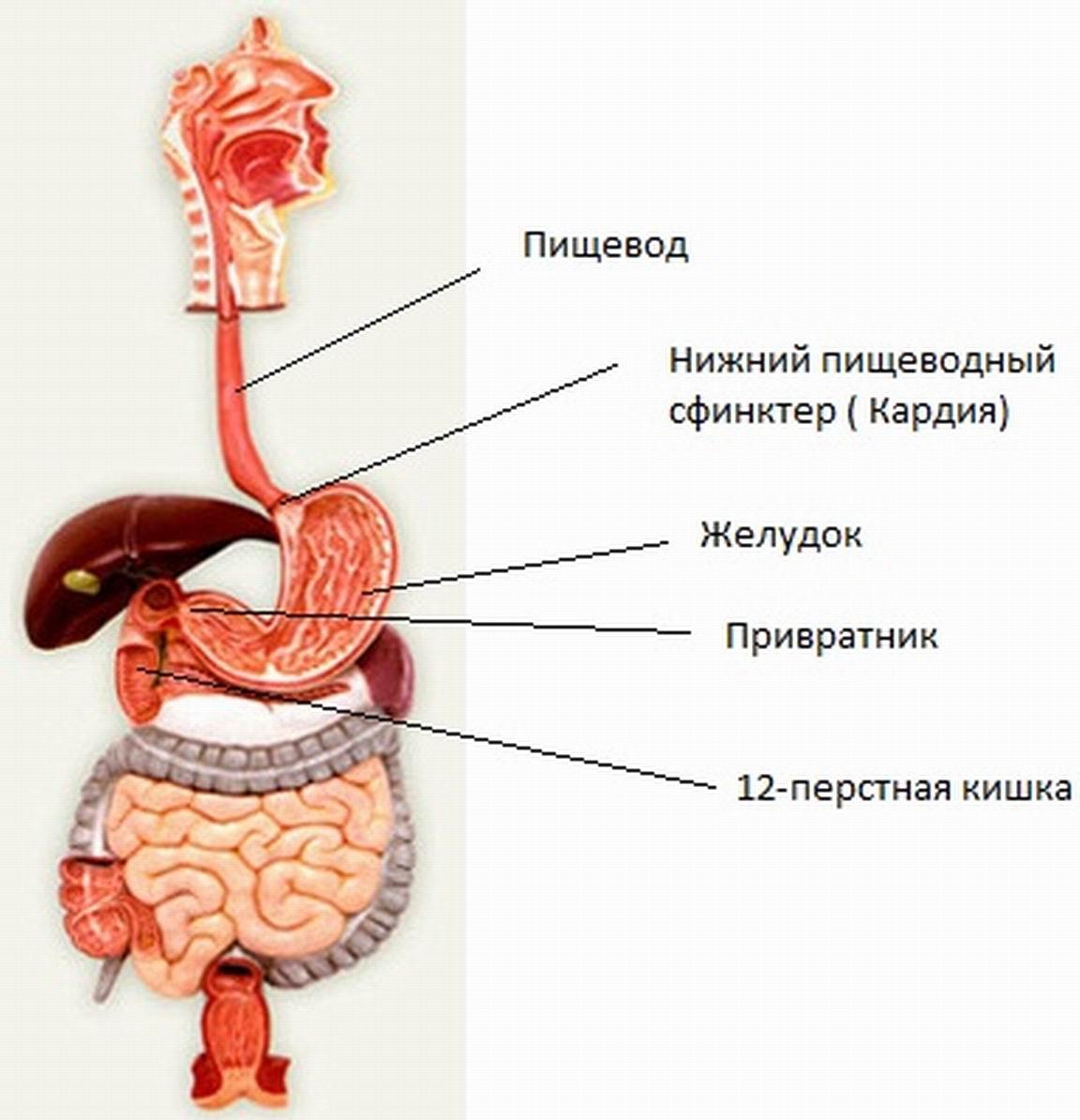 Изжога при беременности: признаки, причины и лечение. Эффективные средства от изжоги.. Народные средства от изжоги в период бере