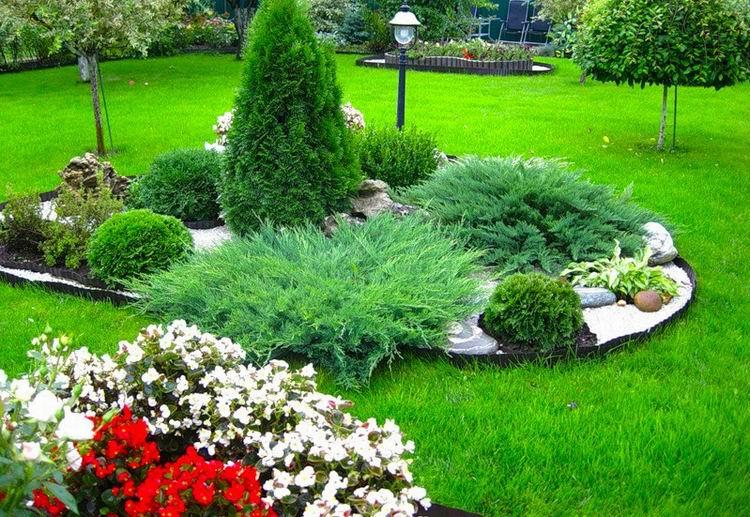 Хвойники в саду и их дизайн