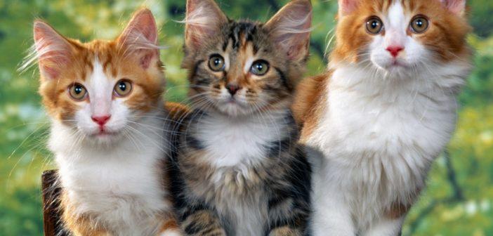 Клички котам оригинальные