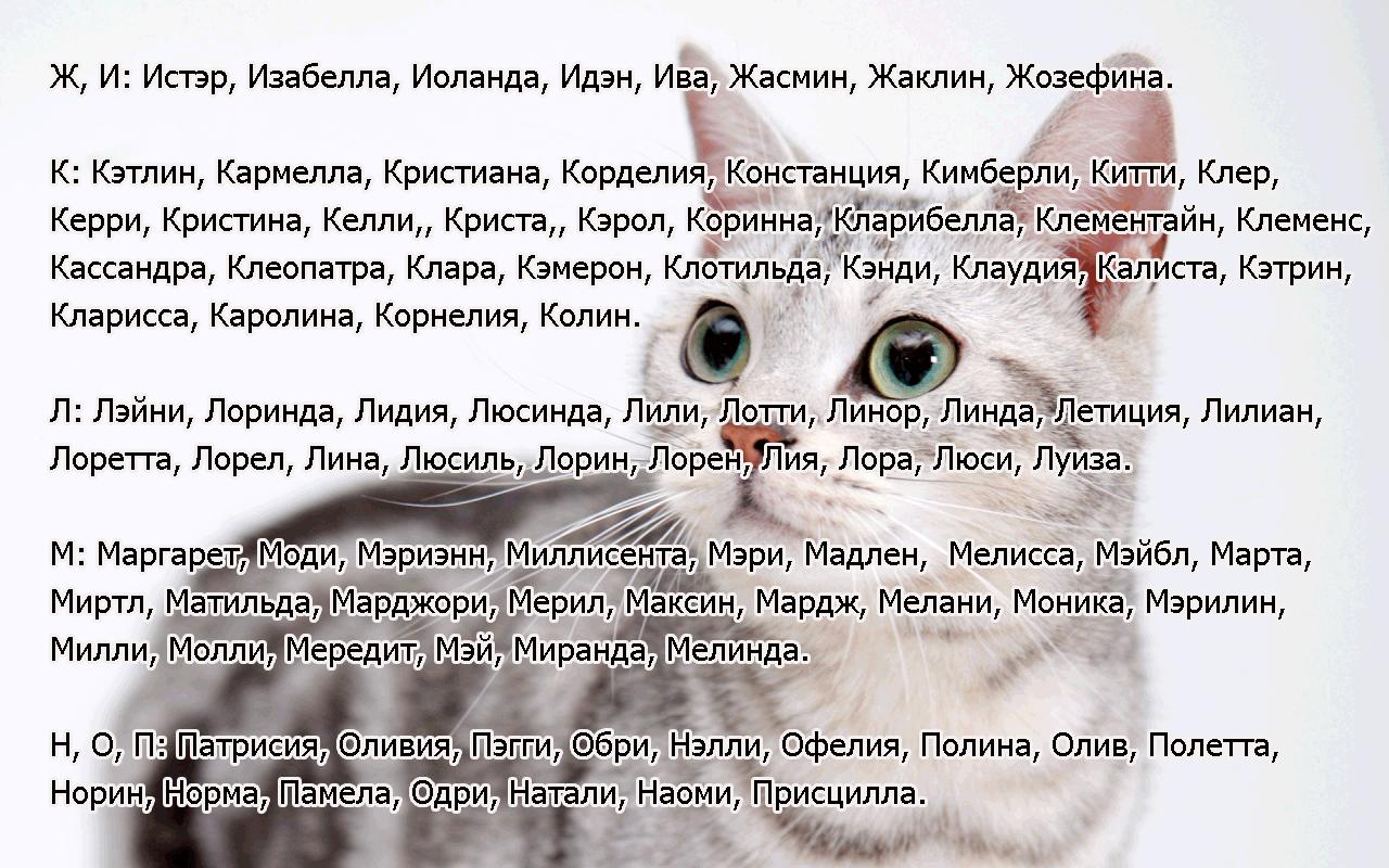 kak-opredelit-vozrast-koshki-po-chelovecheskim-merkam-8