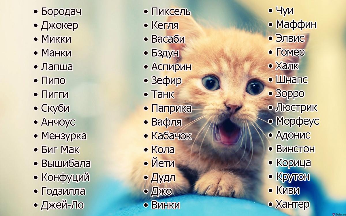 Иностранные клички котам