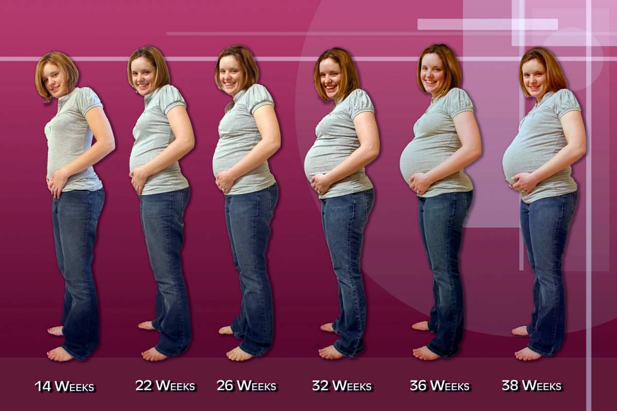 Каком сроке беременная начинает набирать вес