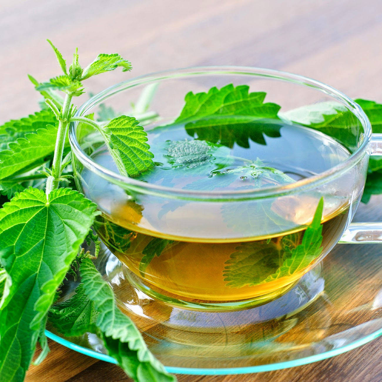 FreeGreatPicture.com-31609-nettle-tea